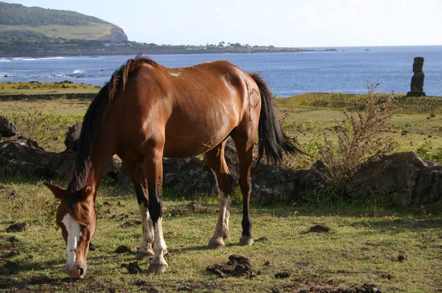 Des chevaux et des Moaï